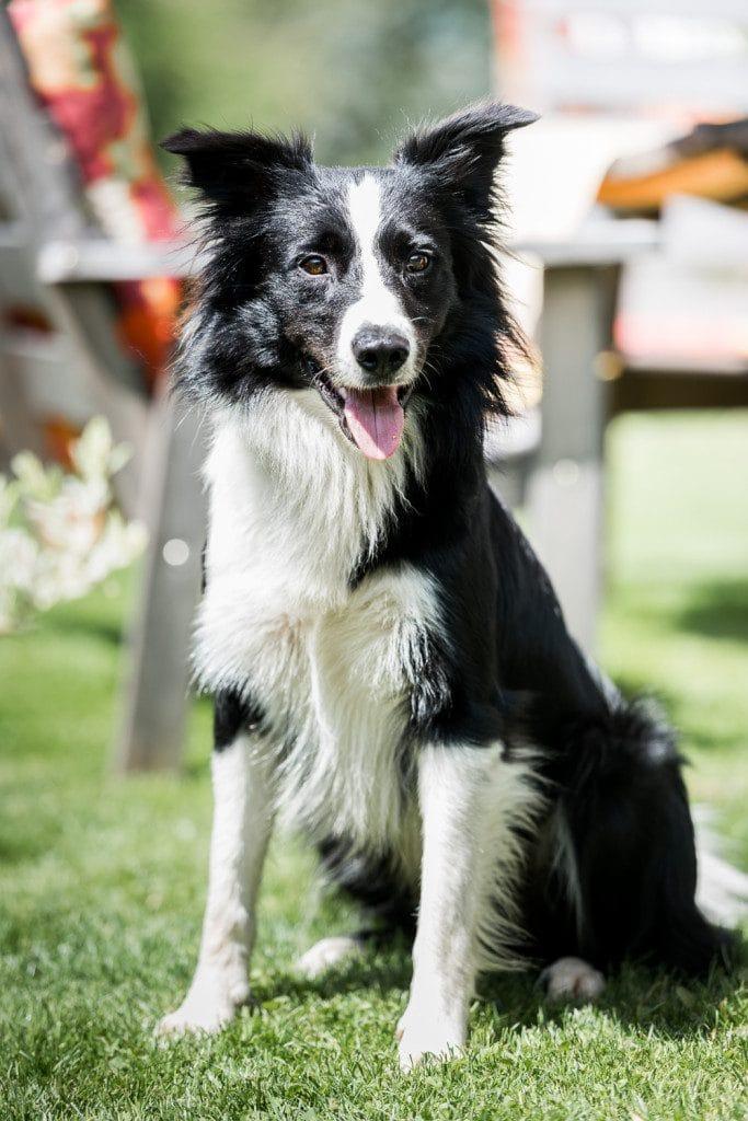 Chalet Rastenhof Hund